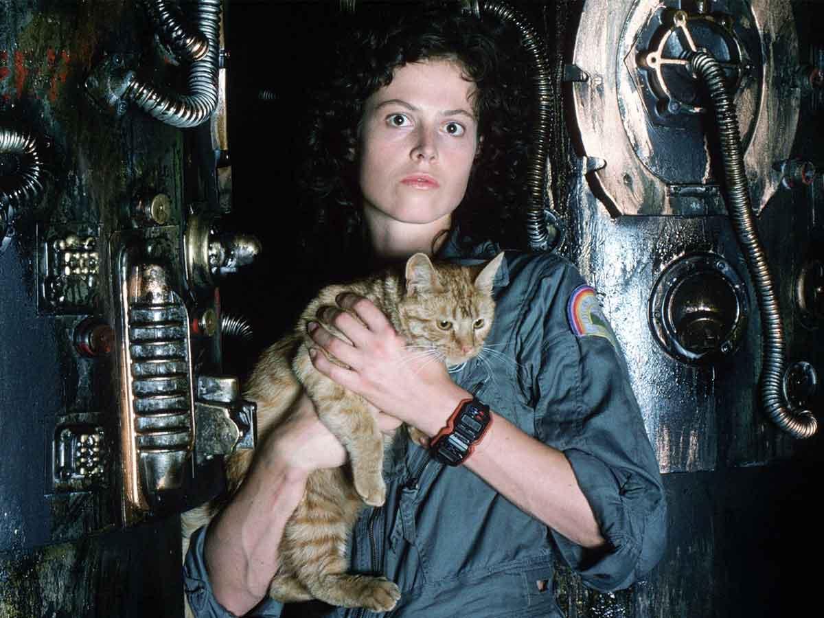 ¿Por qué es tan importante el gato de Alien?